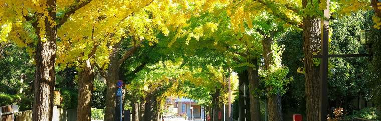 Den-en-chofu, a Garden City Adorned with Ginkgoes
