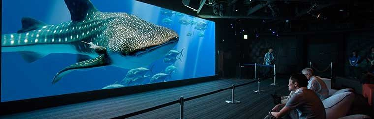 A whale shark can be seen swimming, not in the ocean, but at a surprising event in Ginza, Tokyo!