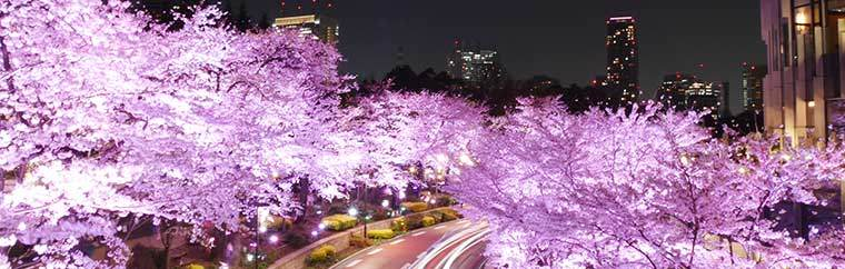 Tokyo's Roppongi Midtown is a cherry blossom spot next to Hinokicho Park. Today we would like to introduce you each spot around the area. Please see map at the end of this article for reference.