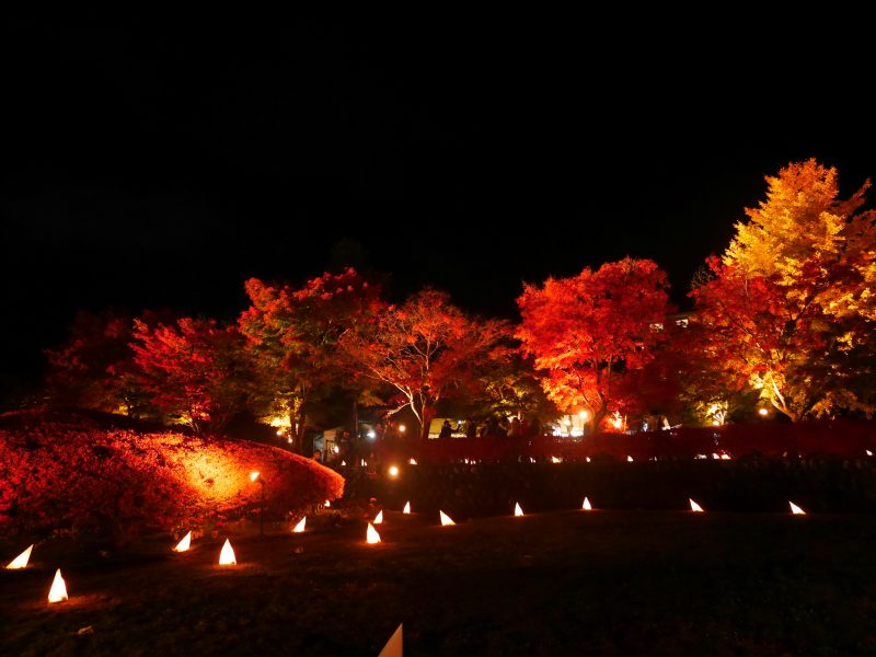 The momiji tunnel at night