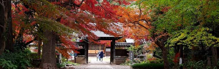 "Especially in the article, I am going to write about highly recommended fall foliage spots in the area, ""Angyo""."