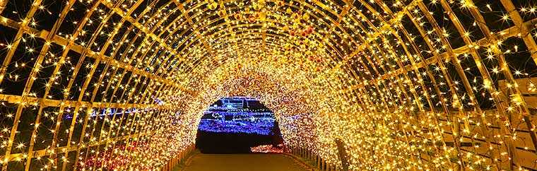 "From Families to Couples, Everyone Can Enjoy this Illumination Display! ""Mother Farm"" is a park full of animals and flowers set on a huge 250 hectare plot. This year, the ever-popular winter illumination will take place there, too!"