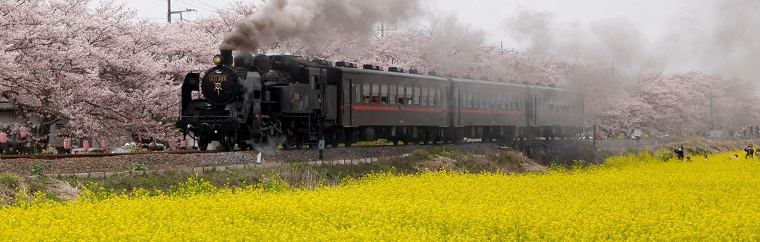 Moka Railway – Steam Locomotive with Cherry Blossoms and Rape Blossoms in Full Bloom! A Day Trip with Beautiful Scenery!