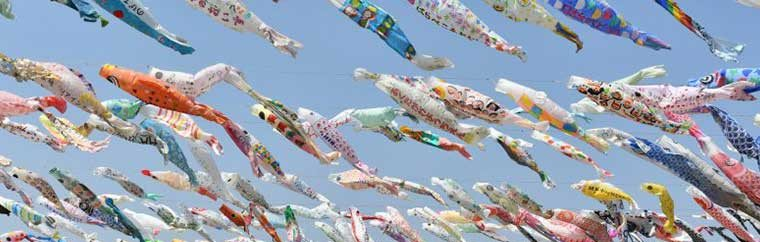In the Koinobori Festa, around 1000 carp-shaped streamers are hung as wishes for children's health and for protection of the Akuta River, a symbol of Takatsuki City.