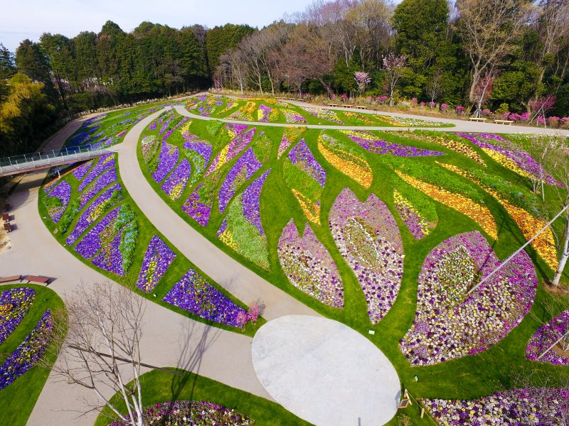 Gigantic flower bed created in 10,000 square meters space
