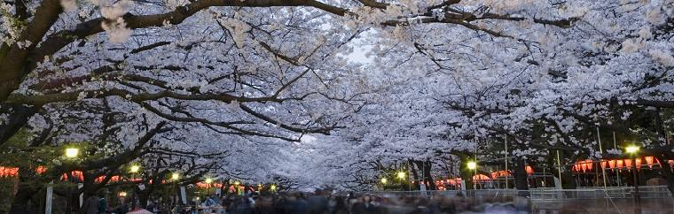 List of all must-visit hanami spots in Tokyo!