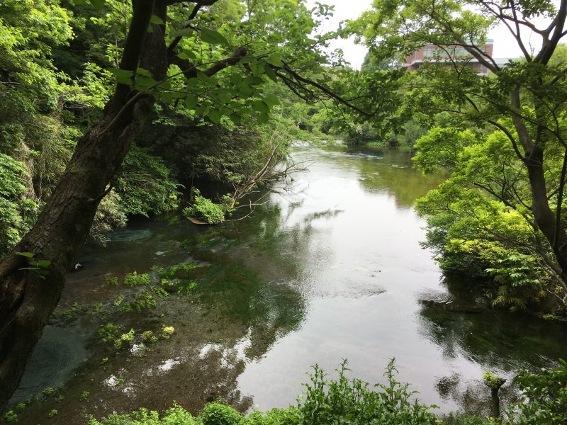 One of the clearest water streams in Japan; Kakita River