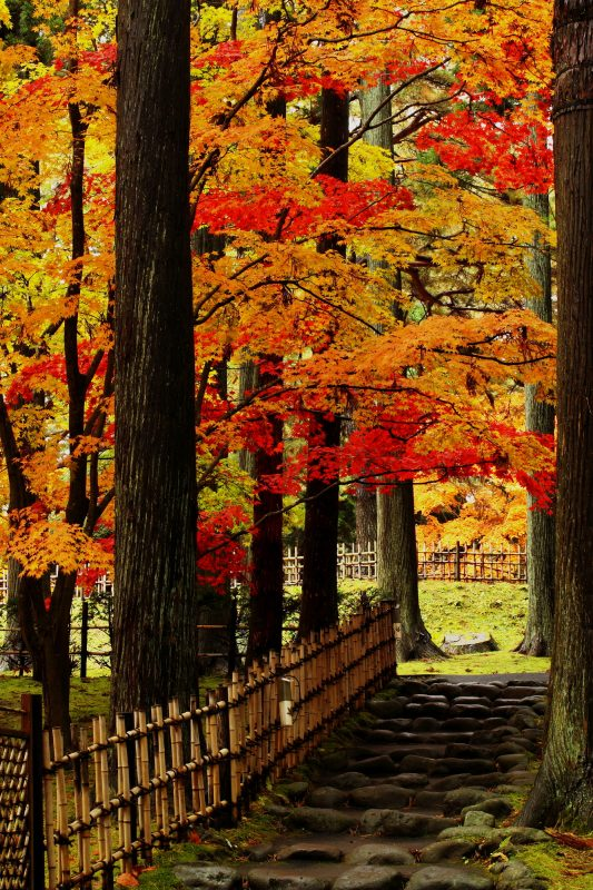 Red Foliage Path