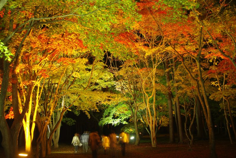 Illuminated fall foliage at night