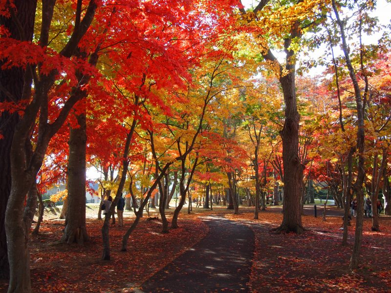 Kosetsu-en, a famous fall foliage viewing spot in Hakodate