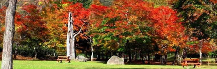 "In Hokkaido's Tokachi, there is one scenic maple viewing spot that is known to a few people, which covers a large area of about 85,000 m2 and where more than 5000 maple trees are planted. It is Fukuhara Mountain Villa, which is affectionately nicknamed the ""beautiful fall colors of Tokachi in Hokkaido"" by the locals."