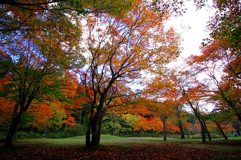 Fallen leaves in Fukuhara Mountain Villa