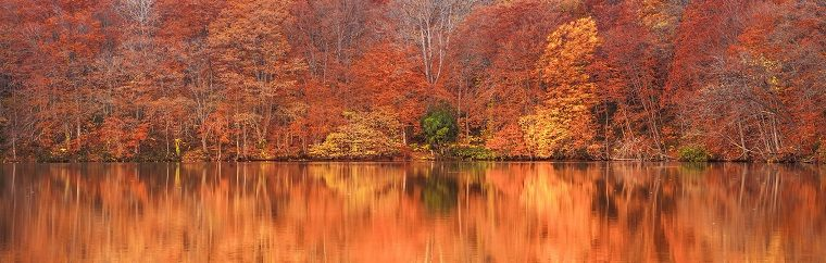 A Fall Foliage Viewing Spot in Aomori: Flaming Fall Foliage Reflections in Water at the Seven Swamps of Tsuta, a Breathtaking Sight at Oirase