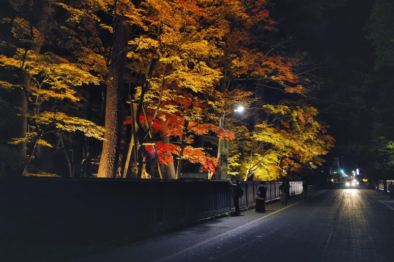 Illumination of the fall foliage on Bukeyashiki Street