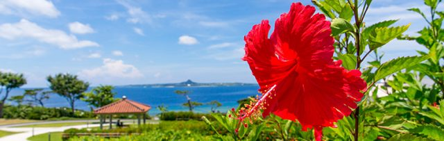 Okinawa's Climate [Sightseeing in Okinawa, from Okinawan Locals]
