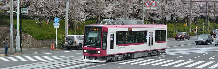 Tram to Enjoy Spring to the Fullest!  Use the Toei Marugoto Kippu (Toei One-day Pass) to View the Cherry Blossoms♪