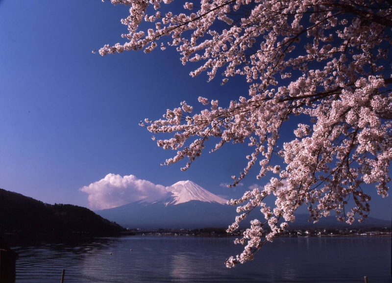 In the Right Weather Conditions, You Can See Mt. Fuji Reflected on the Lake's Surface
