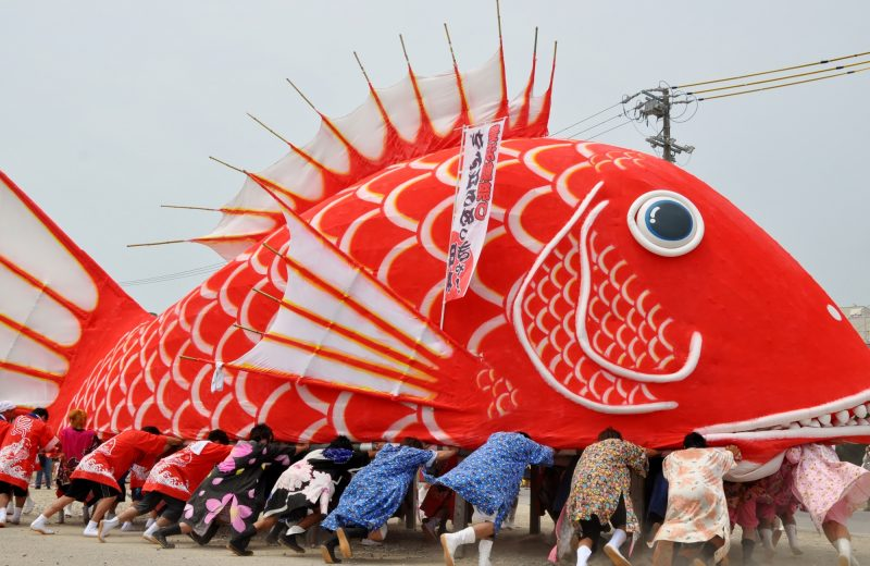 The giant Red Snapper (Tai)