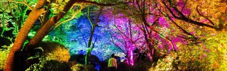 Introducing an Art Exhibit at Mifuneyama Rakuen Park in Saga:  TeamLab's Kami-Sama ga Sumao Mori