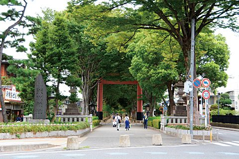 Beautiful Japanese zelkova trees line both sides of this approximately 2 kilometer long path leading to the shrine