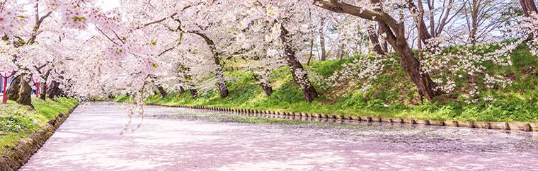 Enjoy the uniquely beautiful scenery that you can only find while cherry blossoms are in bloom with Tohoku's unique nature and historic buildings as the backdrop. Additionally, we will also introduce a convenient and great-value travel path that will make your trip easy!