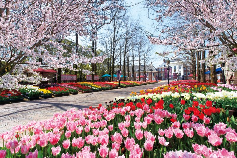 Tulips and Cherry Blossoms