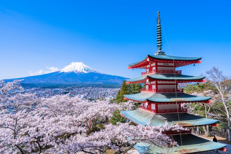 A Beautiful View of Blue Sky, Red Five-Storied Pagoda, and Cherry Blossoms