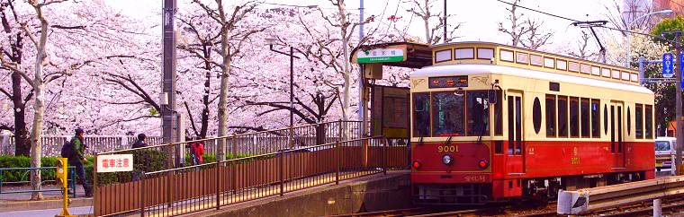 "Cherry blossoms herald in spring in Japan. In Tokyo, they begin to bloom in late March. This article will introduce a sightseeing plan for Tokyo that combines cherry blossom viewing and gourmet foods in a ride on ""Tokyo Sakura Tram (Toden Arakawa Line),"" which takes an efficient route through great cherry blossom locations!"
