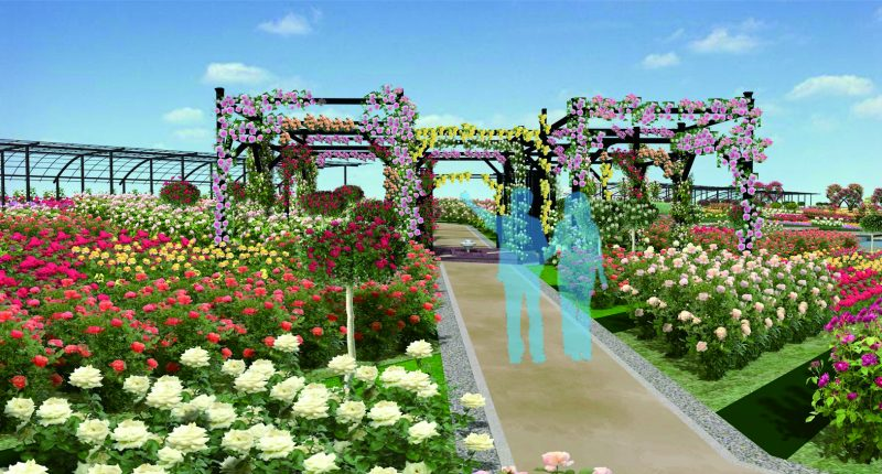 You can walk through the arch of roses in the central path!