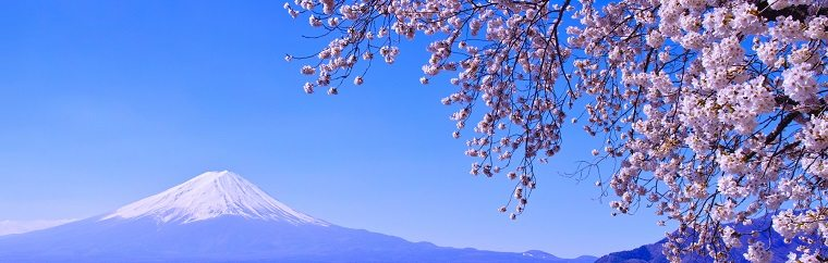 "Here you can enjoy the view of cherry blossoms against the backdrop of magnificent Mt. Fuji and the lake surface from the northern side of the Lake Kawaguchi and Ubuyagasaki. The ""Fuji•Kawaguchiko Sakura Festival"" is held along the perimeter of Lake Kawaguchi."